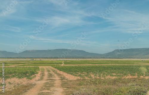 Foto op Aluminium Purper paddy