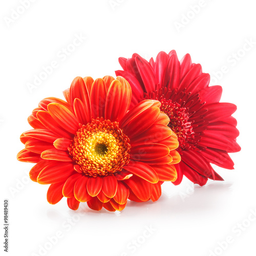 Door stickers Gerbera Gerbera daisy flowers