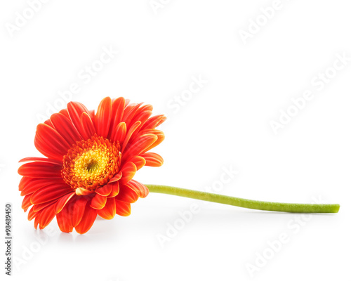 Tuinposter Gerbera Orange gerbera daisy flower