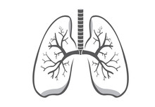 Lung Symbol Gray Color On Isol...