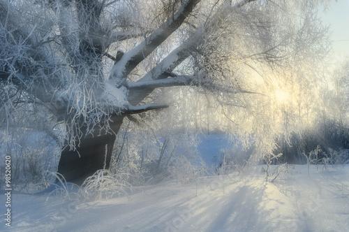 Foto op Plexiglas Grijs Winter picturesque landscape