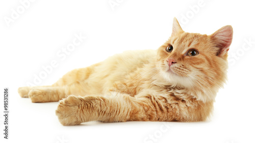 Photo Fluffy red cat laying isolated on white background