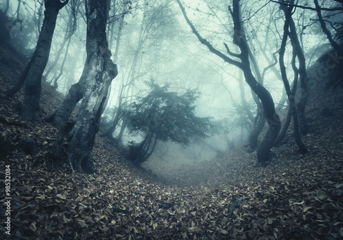 Papiers peints Forets Springa forest in fog. Beautiful natural landscape. Vintage style