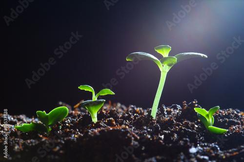 Fotografie, Obraz  Seedling growth