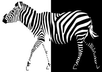Panel Szklany Podświetlane Zebry Zèbre pop art mi noir, mi blanc