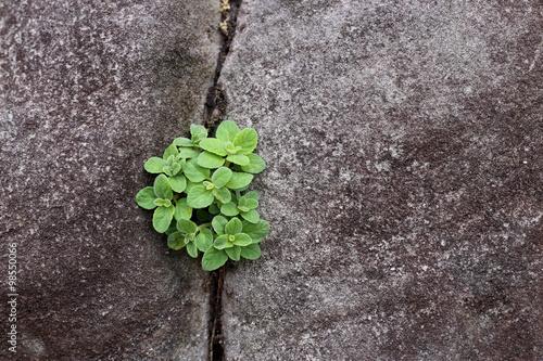 Photo  Plant grow up on cracked stone.