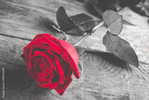 czerwona-roza-na-czarno-bialym-drewnianym-tle