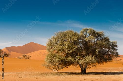 Fotografie, Obraz  Wüstenlandschaft mit Baum und roten Dünen; Sossusvlei; Namibia