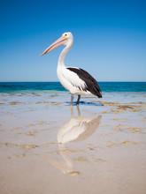 Australia, Yanchep Lagoon, 04/...