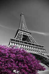 Fototapeta Paryż infrared photography Eiffel Tower