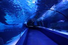 Turkish Oceanarium Inside