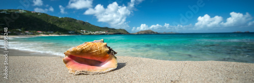 Foto Shell in a Caribbean beach