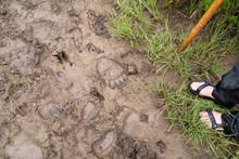 Man Standing Next To Animal Tracks In Mud