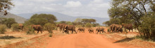 Elephants In Tsavo East National Park