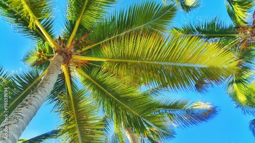 Foto auf Gartenposter Palms Coconut palm tree perspective view against blue sky