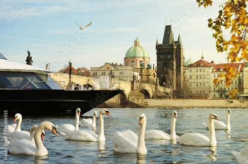Cruise on Vltava River in Prague / A Cruise Boat Between a Herd of Swans and Cha Canvas Print