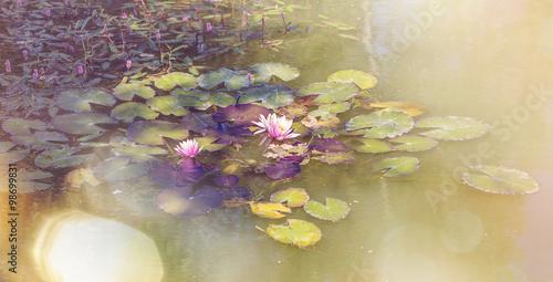 Fototapeta  Růžová lotus jezero