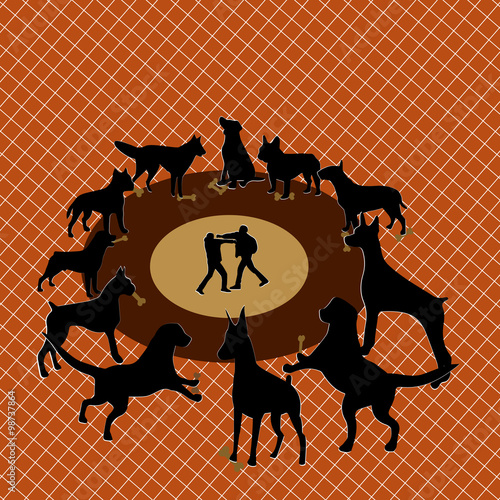 Fotografia, Obraz Opposite dogfighting