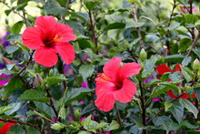 Flowers Of A Blossoming Bush H...