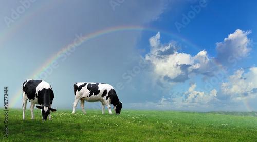 Naklejki krowa  herd-of-cows-at-summer-green-field