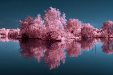 Fototapeta Krajobraz infrarouge