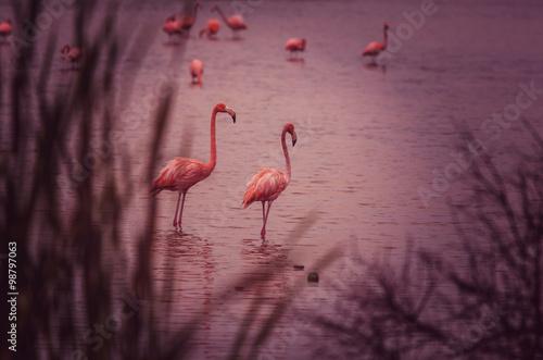 Garden Poster Flamingo Flamingo in Mexico
