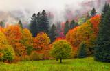 Fototapeta Natura - Misty autumn Transcarpathia
