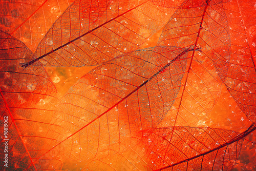Acrylic Prints Decorative skeleton leaves Abstract skeleton leaves background