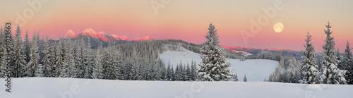 Fototapeta Ukrainian Carpathians snowy forest obraz