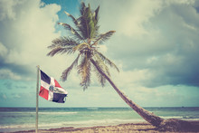 Palm Tree On Caribbean Coast