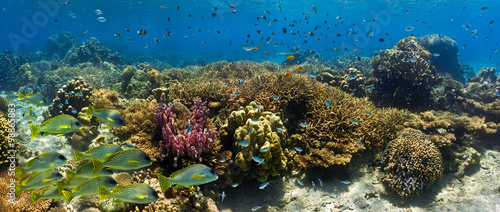 Spoed Foto op Canvas Koraalriffen Shoal of fish on the coral reef - panorama
