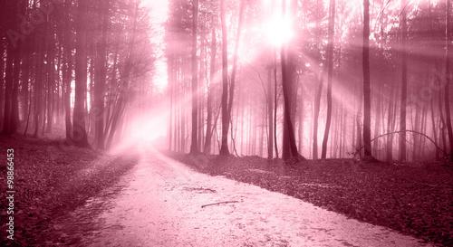 lesna-droga-w-promieniach-sl