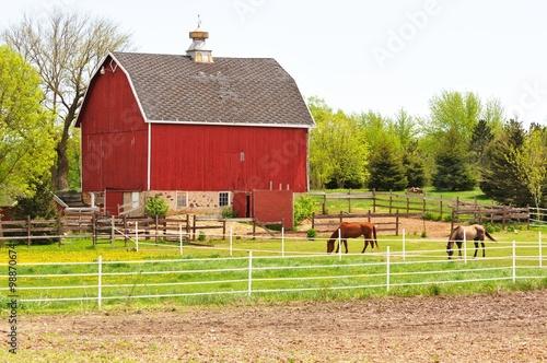 Fotografie, Obraz  Barn and Horses