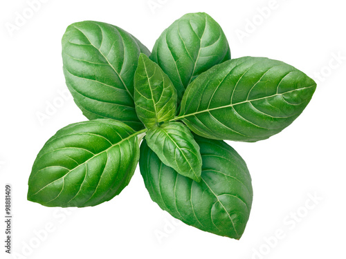 Carta da parati Genovese basil isolated
