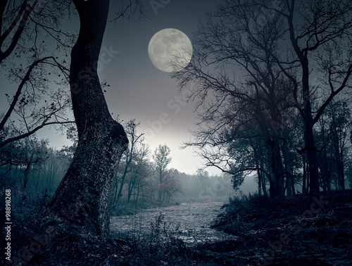 Fototapeta Úplněk v noci