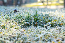 Grund Frost With Green Grass