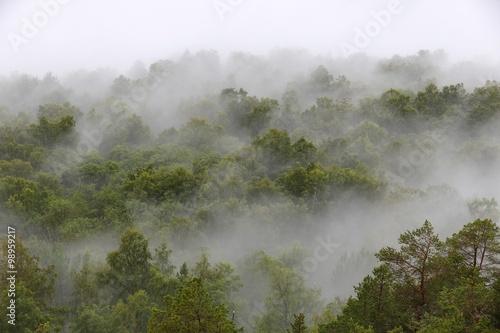 Poster Scandinavie Misty forest in Aurland, Norway