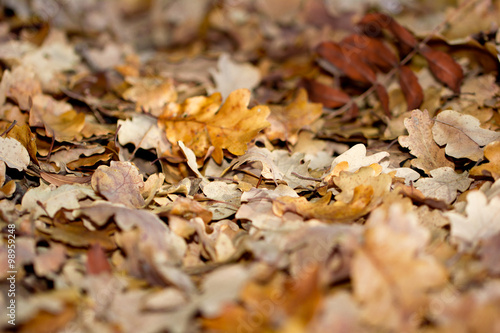 Tuinposter Koekjes foglie, autunno, dettaglio
