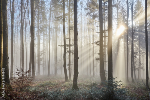 Poster Bossen Sun rays through the foggy forrest