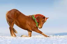 Red Horse Do Trick  In The Decorated Christmas Wreath