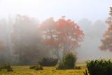 Fototapeta Natura - Beech forest in autumn on the slopes of the Carpathians