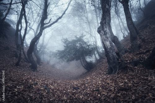 Fototapety, obrazy: Spring forest in fog. Beautiful natural landscape. Vintage style