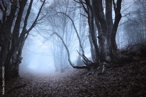 Aluminium Prints Dark grey Spring forest in fog. Beautiful natural landscape. Vintage style
