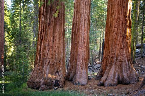Photo  The Three Graces, Yosemite, USA
