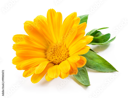Fotomural  Calendula. Marigold flower with leaves isolated on white