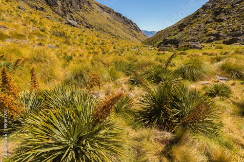 Fotografia, Obraz  beautiful meadow with tussock and spaniard