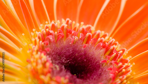 mata magnetyczna Flower macro shot