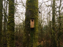 Birdhouse On A Mossy Tree