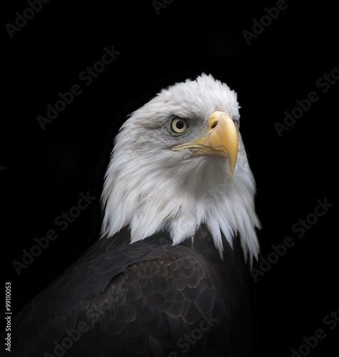Deurstickers Eagle The head and shoulder of a bald eagle, haliaeetus leucocephalus, isolated on black background. The American eagle, US national character, very beautiful bird with proud expression.
