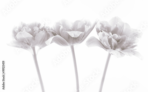 Photo  Beautiful spring flowers. Retro effect